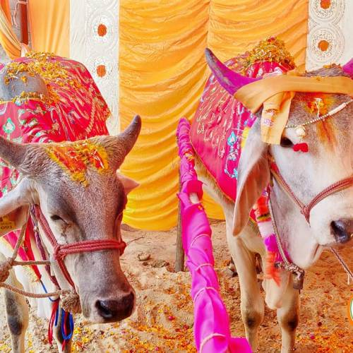 Godham Mahatirth Anandvan Pathmeda Sanchore